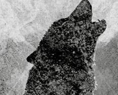 dedans-loups-stephane-jolibert-l-i1zeyy-235x190